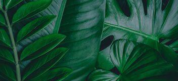 Creative nature background. Gold and green tropical Monstera and palm leaves. Minimal summer abstract jungle or forest pattern.