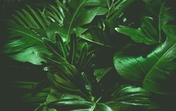 Green background concept.Tropical palm leaves, jungle leaf
