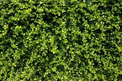 Green background. royalty free stock image