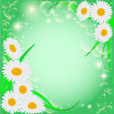 Of a green background with daisies and stars Stock Image