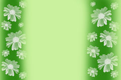 Green background with daisies. Green background for text with beautiful white daisies Royalty Free Stock Image