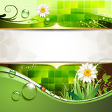 Green background with daisy. And drops of water and drops of water vector illustration