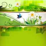 Green background with daisy. And drops of water Stock Photo