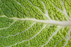 Green background - detail of a cabbage leaf Royalty Free Stock Images