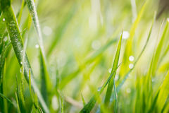 Green background, detail of grass Royalty Free Stock Photos