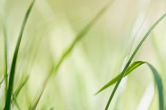 Green background, detail of grass Royalty Free Stock Images