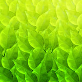 Green background with different leaves pattern Stock Photos