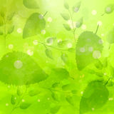 Green background with different leaves pattern. Watercolor artistic vector texture Royalty Free Stock Photography