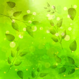 Green background with different leaves pattern. Watercolor artistic vector texture Stock Photos