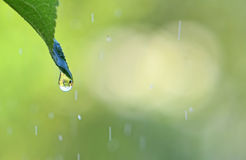 Green background with drop of rain. Stock Photo