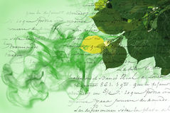 Green background with elements of flora Stock Image