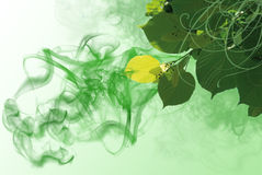 Green background with elements of flora Stock Images