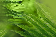 Green background with fern leaves. Light green background with fern leaves. Shallow depth of field. Collage Stock Images