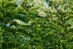 The green background of foliage Stock Photo