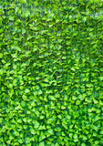 Green background in the form of artificial foliage. Stock Images