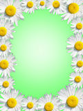 Green  background framed by  white daisies. With space for text Royalty Free Stock Photography