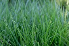Green background by the fresh grass stock image
