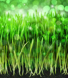 Green Grass Background. A fresh spring grass background with star lights Royalty Free Stock Photography
