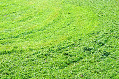 Green background of freshly cut grass. Natural texture of field. Stock Photos