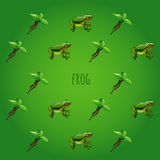Green background with frog and unusual flower Royalty Free Stock Photography