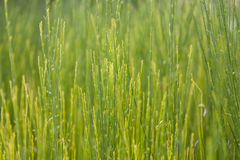 Green background. Grass. Bright green background. Texture high grass vegetation royalty free stock photography