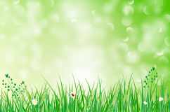 Green background with grass, flowers and blurred bokeh. Vector illustration Stock Photos