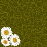 Green background from grass and flowers of camomile in corner Royalty Free Stock Images