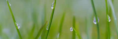 Grass panorama with raindrops Stock Photo