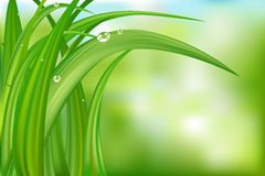 Green Background With Grass. Vector Stock Image