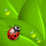 Green background with ladybird and dew Stock Image