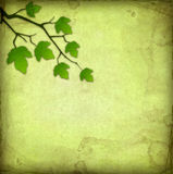 Green background with leaves Stock Photos