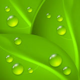 Green background with leaves and drop of dew Stock Image