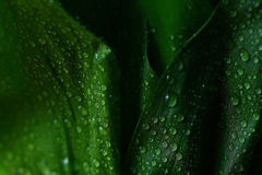 Green background leaves Stock Photography