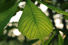 Green background from the leaves of the forest.  stock images