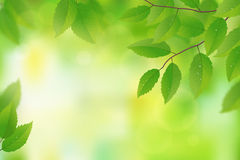 Green background with leaves Royalty Free Stock Images