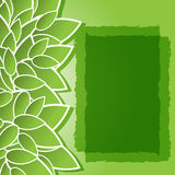 Green background with leaves Stock Image
