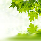 Green Background with Leaves Royalty Free Stock Photography