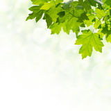 Green Background with Leaves Stock Photo