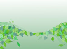 Green background. With leaves and wool full of freshness royalty free illustration