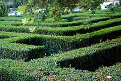 Green background of living fence. In the shape of maze Royalty Free Stock Photos