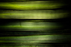 A green background made of agave leaf Stock Photography