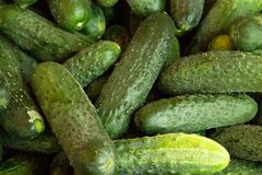 Green background. Organic eating. Agriculture retailer. Farmer`s nature food. fresh cucumber in the supermarket.  stock photo
