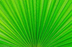 Green background Stock Photography
