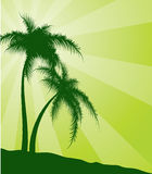 Green  background with palm trees Royalty Free Stock Photography