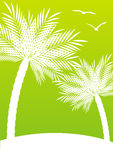 Green  background with palm trees Stock Photos