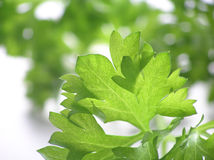 Green background of parsley Stock Photos