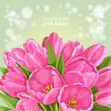 Green background of pink tulips Royalty Free Stock Photo