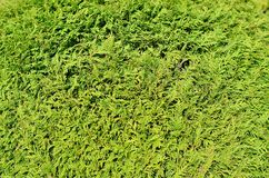 Green background. From a plant Stock Photo