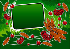 Green background with red ashberry and banner Stock Photos
