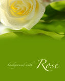 Green background with rose Royalty Free Stock Photo